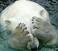 곰돌이 없다곰~♥