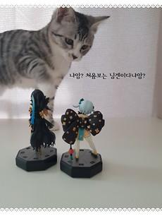 [피규어 인증] 토이저러스, 고양이의 습격을 받다!